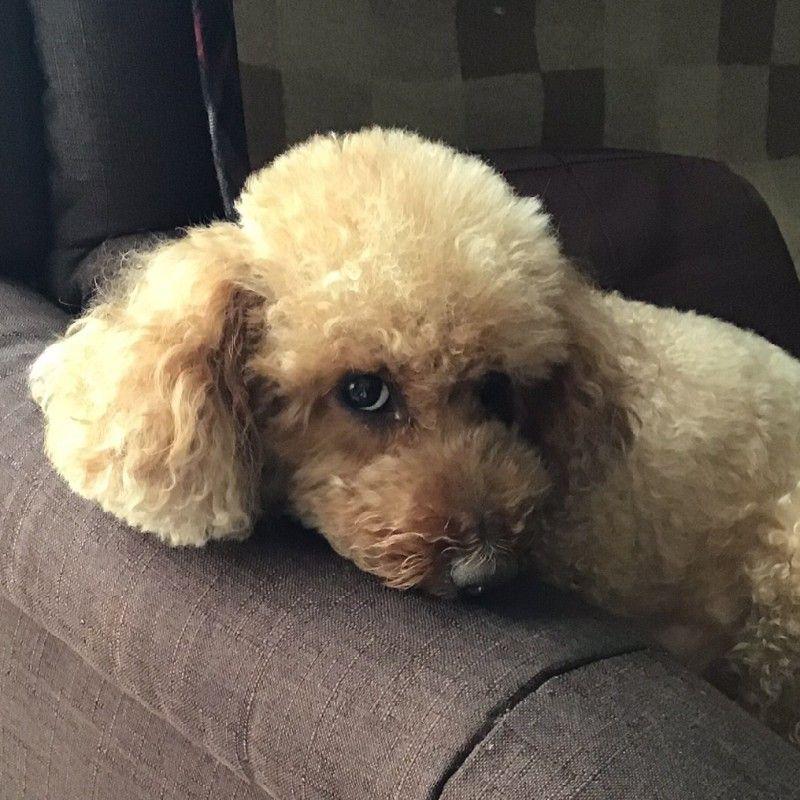 Chikoの画像