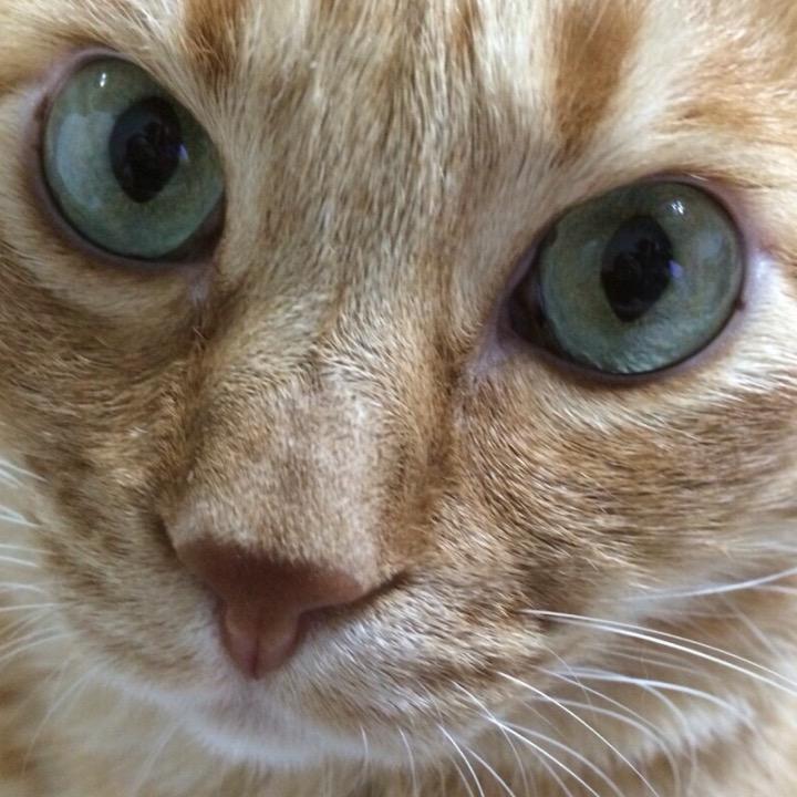 猫5飯の画像