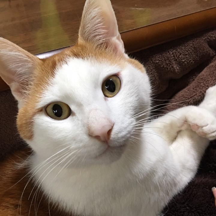 猫さんの画像