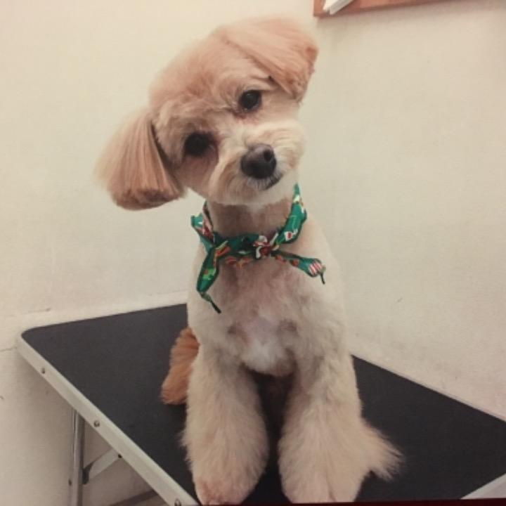 LIC☆NYの画像