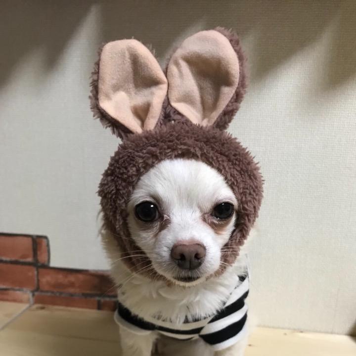 Chika☆の画像