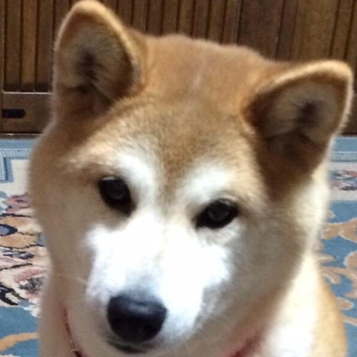 koyukiの画像