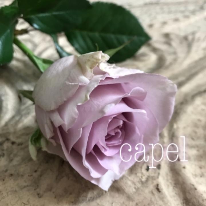 capelの画像