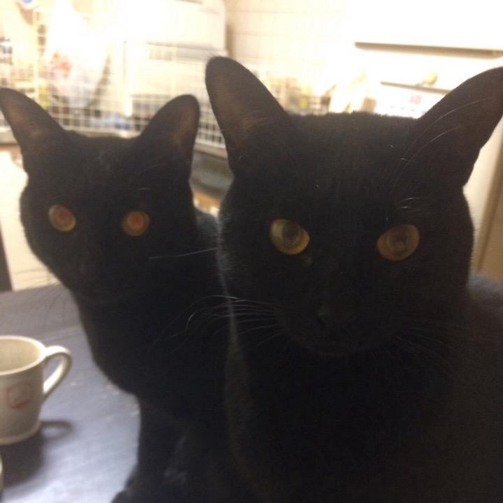 黒猫製作所🐾の画像
