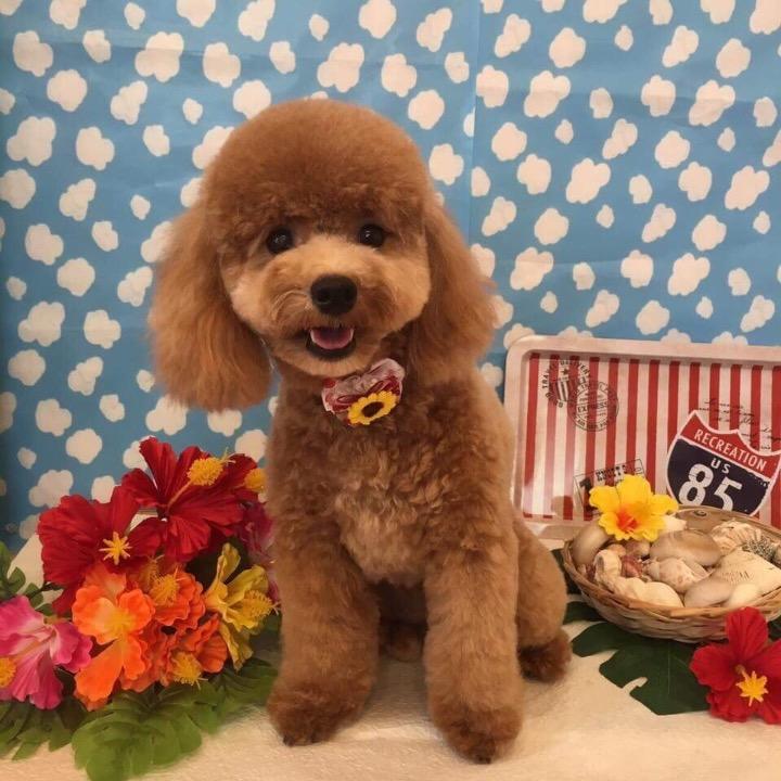 kazuの画像