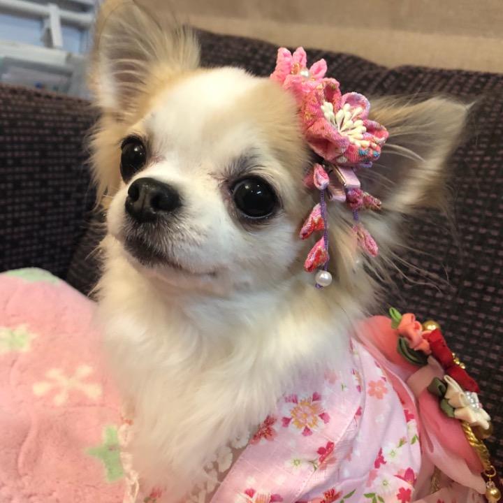 ♡RIEBE♡の画像