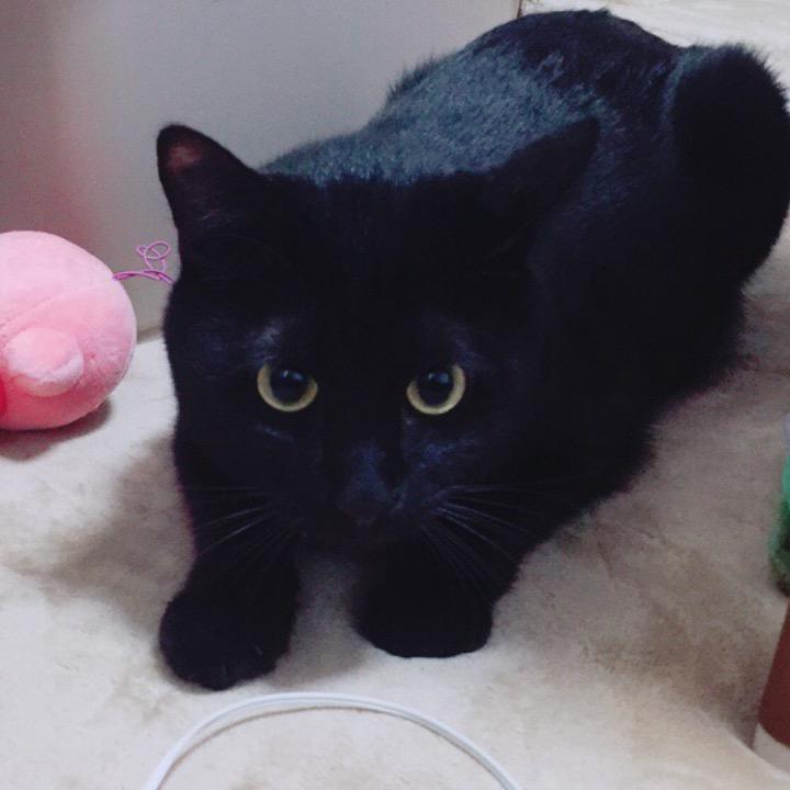 黒猫のクマ(ᵔᴥᵔ)の画像