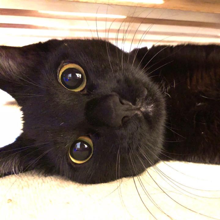 黒猫nagoyaの画像
