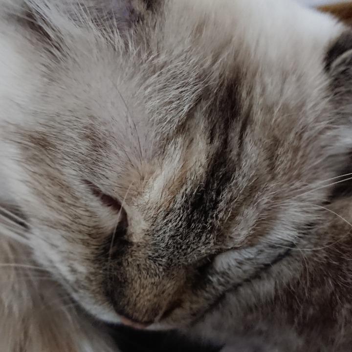 ネコになりたい(=^ェ^=)の画像