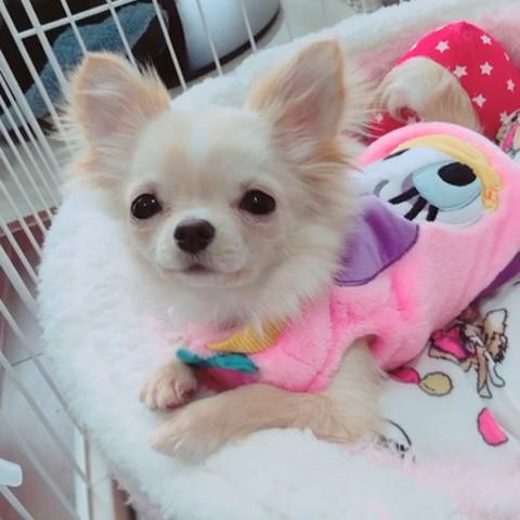 maikoの画像
