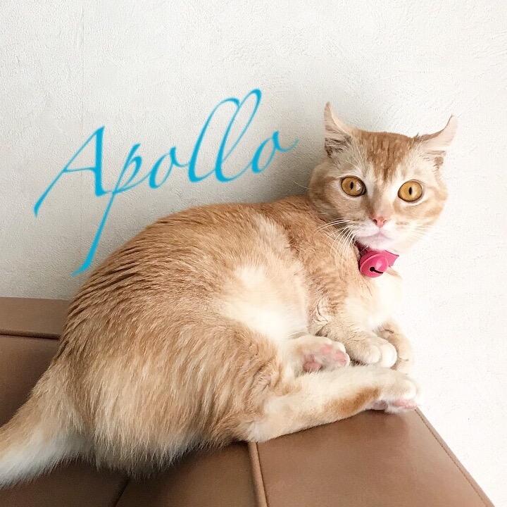 Apollomomの画像