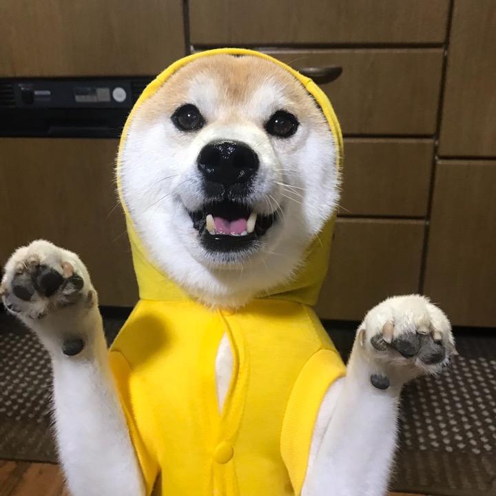 柴犬さん太の画像
