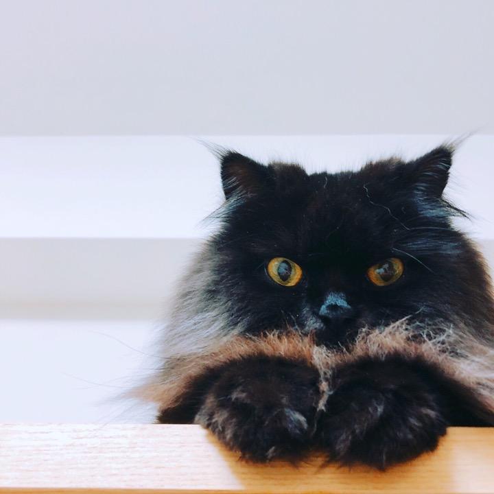 ichi-gouの画像
