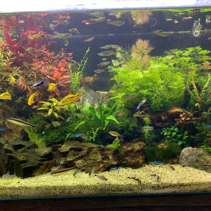 kouta_aquariumの画像
