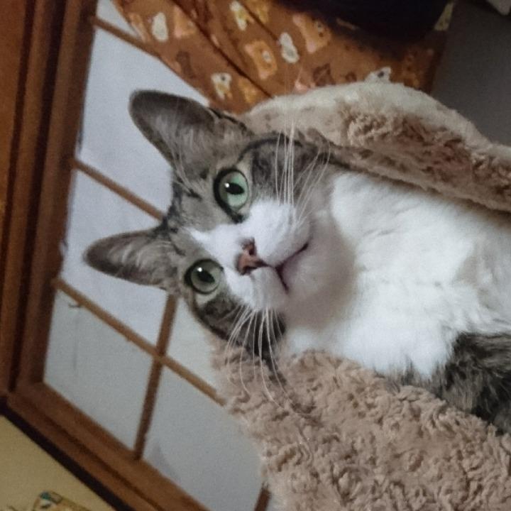 猫は神の画像