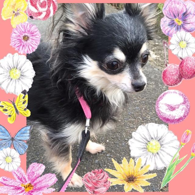 リリィの画像
