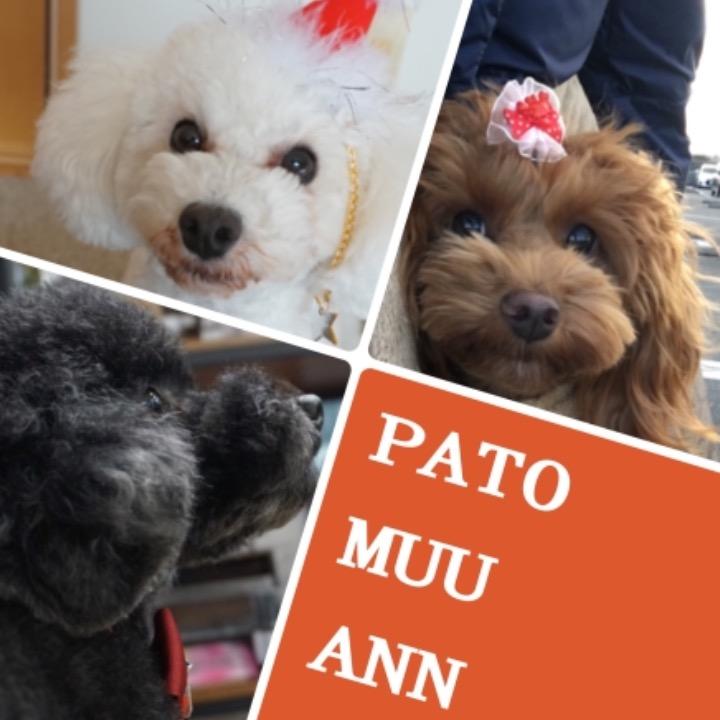 pato_muu_annの画像