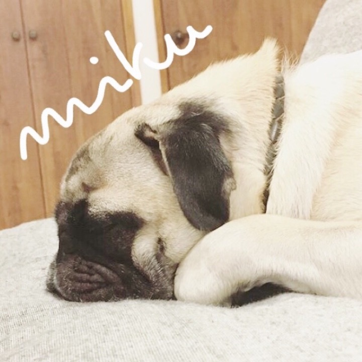 mikuの画像