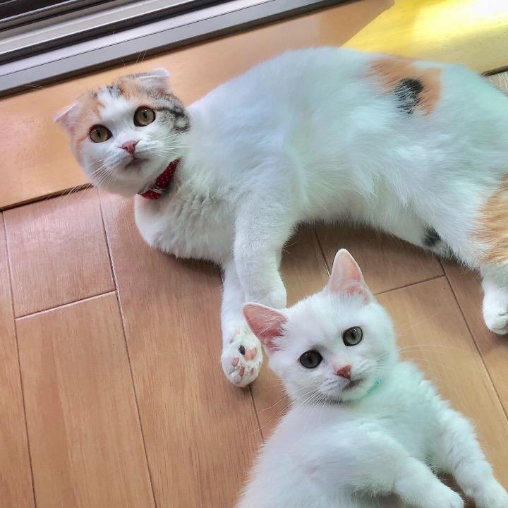 メイ&ルイ ママの画像