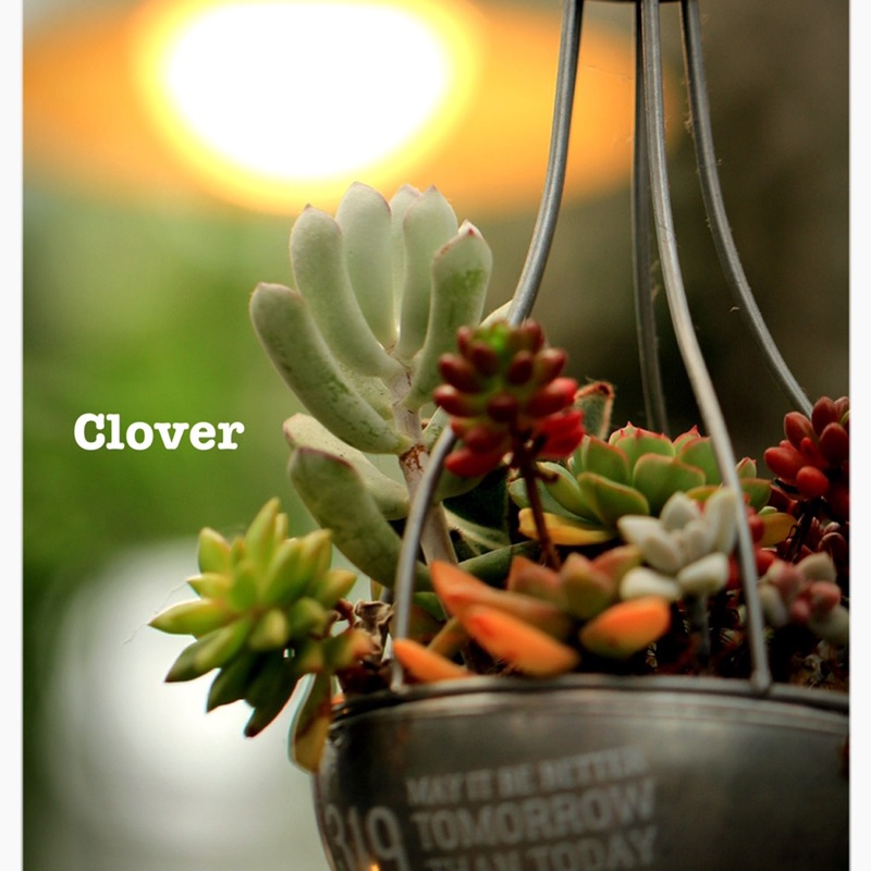 Cloverの画像