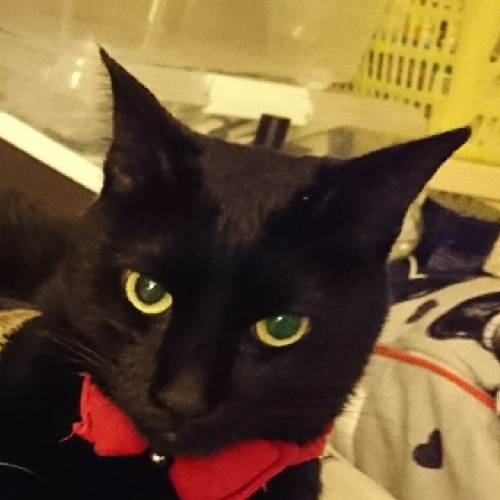 猫子( ΦωΦ )の画像
