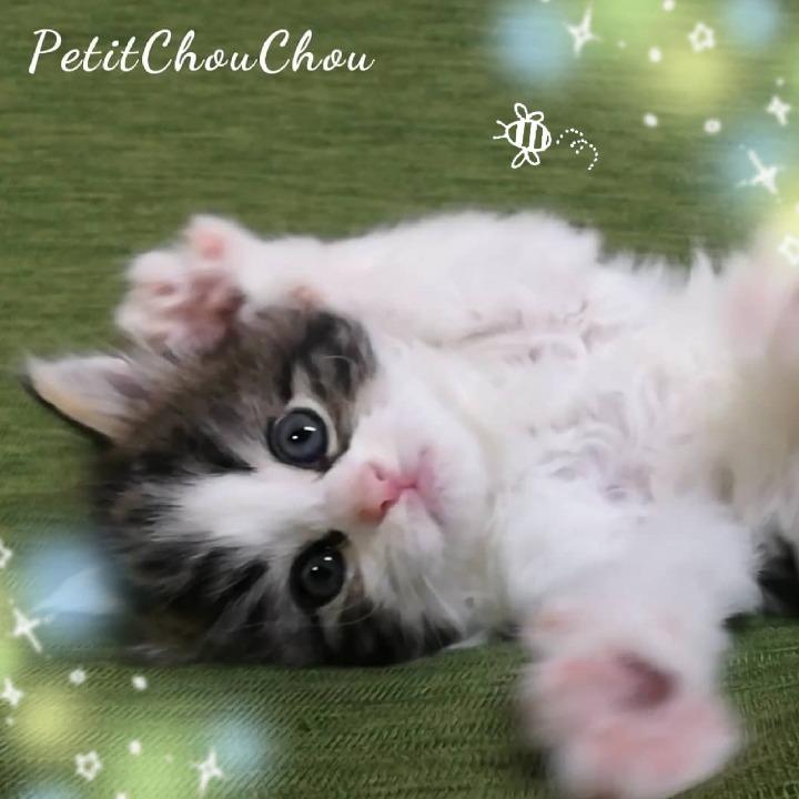 Petit ChouChouの画像
