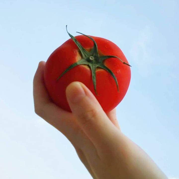 ohayo.tomatoの画像