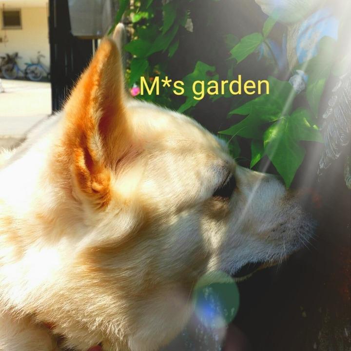 M*s gardenの画像