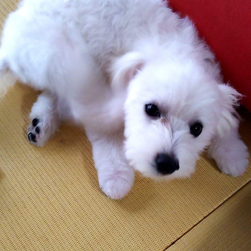ミックス犬🐶レオ 8ヶ月の画像