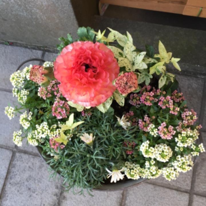 花花の画像