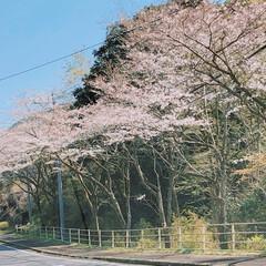 3月27日のフォト/3人で映画へ/娘の運転/息子の誕生日の日のお出かけ/春のフォト投稿キャンペーン お花見する間もなく…今は葉桜へ。