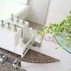 フェイクグリーン/バスルーム/詰め替えボトル/ディスペンサー/お風呂/フォロー大歓迎/... バスルームにも癒しが欲しくてフェイクグリ…