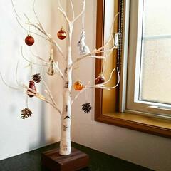 シラカバツリー/雑貨/リミアの冬暮らし/ニトリ/暮らし/フォロー大歓迎 昨日までのシラカバツリー。 秋らしいブラ…