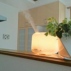 アロマディフューザー/加湿器/フォロー大歓迎/冬/おうち/無印良品 冬の必需品はズバリ加湿器! 乾燥はお肌に…