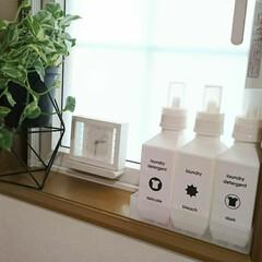 観葉植物/ラベル/洗剤ボトル/洗面所/あけおめ/フォロー大歓迎/... 洗濯用洗剤ボトルは洗面所の小窓スペースに…(1枚目)