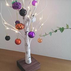 白樺ツリー/シラカバツリー/ニトリ/カボチャ/ハロウィン ニトリで購入したシラカバツリーにハロウィ…