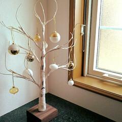 玄関インテリア/シラカバツリー/クリスマス2019/ニトリ/フォロー大歓迎 玄関に飾っているシラカバツリーをクリスマ…