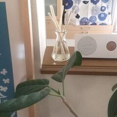Sawaday香るStick 北欧 つめ替用 リラクシングウッド 6ml   小林製薬(液体洗剤)を使ったクチコミ「香るスティック北欧バージョンのディフュー…」