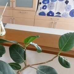Sawaday香るStick 北欧 レモンリーフ 70ml | 小林製薬(液体洗剤)を使ったクチコミ「少しでもお部屋が涼しく感じられるよう、涼…」