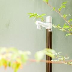 立水栓/植栽スペース/植栽/モダンエクステリア/エクステリアデザイン/エクステリア/... 水場もこだわりのお庭の見せ場のひとつ。モ…(2枚目)