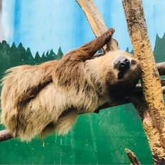 2018/思い出/動物 ノースサファリサッポロは大好きな動物園で…