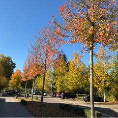 読書の秋/秋/おでかけ 今日のチューリッヒは、とてもステキな秋晴…