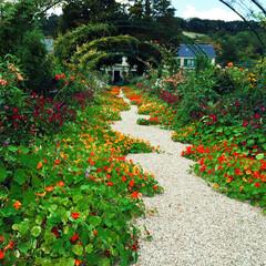 Monet Garden/Giverny/Claude Monet/France/ジヴェルニー/クロード•モネ/... 【モネの庭】  お庭も広く、たくさんのお…