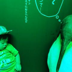 水族館/おばけ/寝かしつけ/双子/日常/娘/... 先日某百貨店に来てる冒険水族館というイベ…