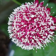 「6月に入り一段と花がたくさん咲きだしまし…」(10枚目)
