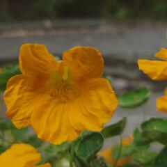 「6月に入り一段と花がたくさん咲きだしまし…」(2枚目)