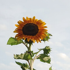 「畑は収穫、収穫。最盛期!毎回汗だくで😱今…」(6枚目)