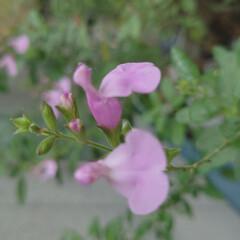 「6月に入り一段と花がたくさん咲きだしまし…」(3枚目)