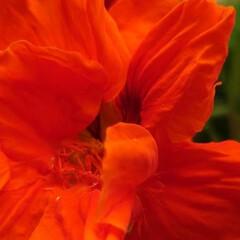 「6月に入り一段と花がたくさん咲きだしまし…」(1枚目)
