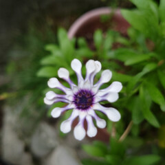「6月に入り一段と花がたくさん咲きだしまし…」(6枚目)